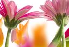 Fleuriste Butterfly - Fleuriste