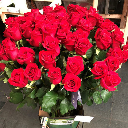 Roses rouges 002