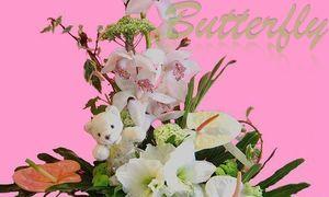 Fleuriste Butterfly - Naissance