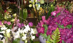 Fleuriste Butterfly - Décoration